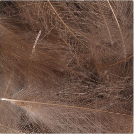 Taimen Pióra CDC Feathers Natural Colors Brown